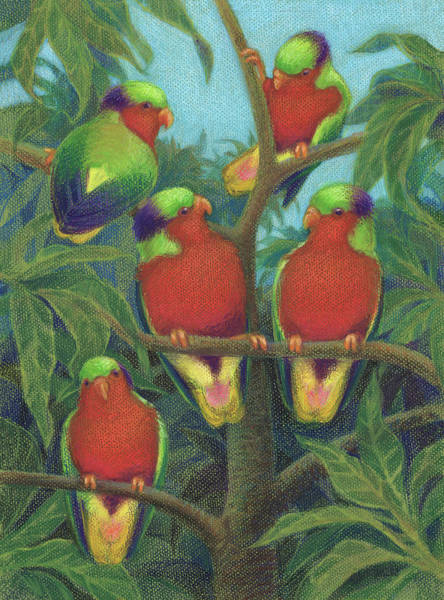 Drawing - Rimatara Lorikeets by Judith Kunzle
