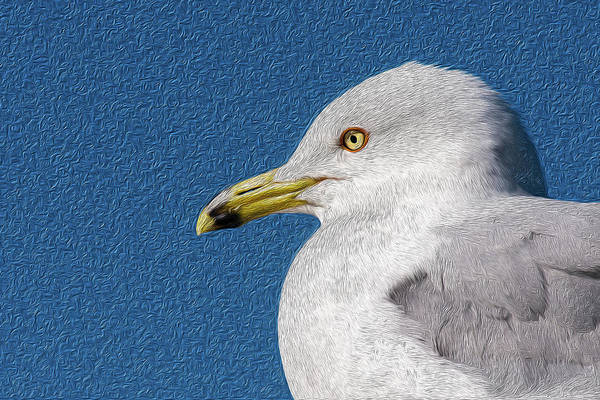Mixed Media - Ring-billed Gull Oil Portrait by Onyonet  Photo Studios