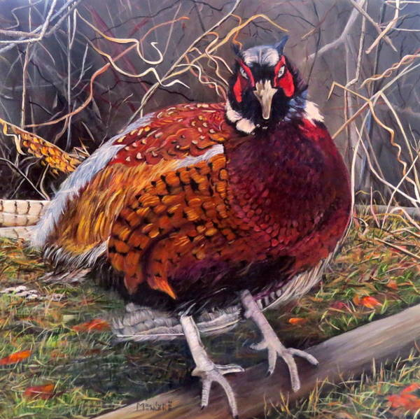 Painting - Ring Neck Pheasant by Marilyn McNish