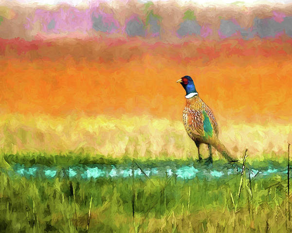Pheasant Digital Art - Ring Necked Pheasant by Casey Heisler