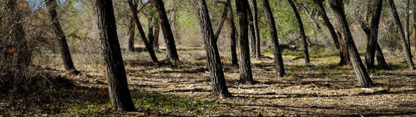 Photograph - Rio Grande Bosque Near Bernalillo New Mexico by Mary Lee Dereske