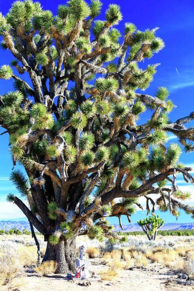 Yucca Palm Photograph - Rip At Mojave National Preserve by John Rizzuto