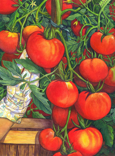 Painting - Ripe by Catherine G McElroy