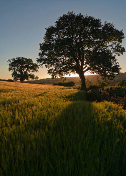 Photograph - Ripe Harvest At The End Of The Day by Pete Hemington