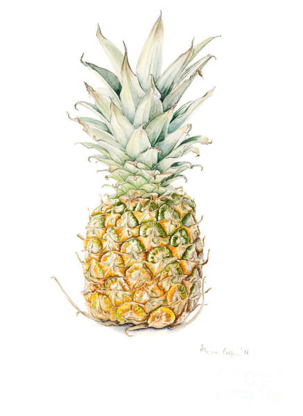 Wall Art - Painting - Ripe Pineapple by Alison Cooper