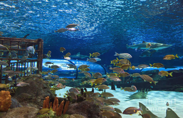 Photograph - Ripley's Aquarium by Jill Lang