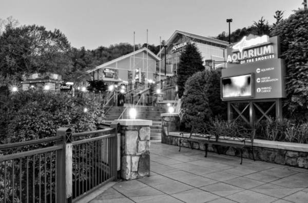 National Aquarium Photograph - Ripley's Aquarium Of The Smokies In Black And White by Greg and Chrystal Mimbs