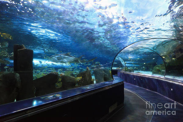 Photograph - Ripley's Aquarium Tunnel by Jill Lang