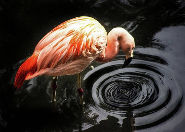 Exotic Bird Photograph - Ripple by Martin Newman