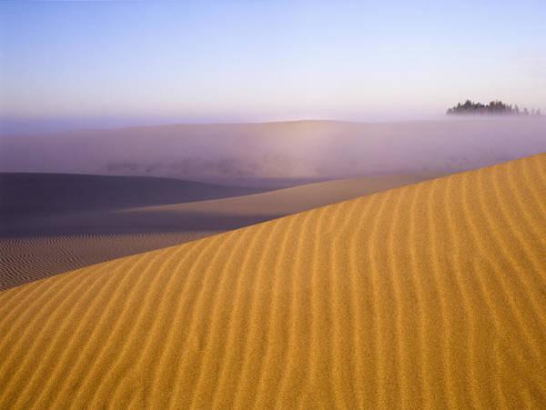 Photograph - Rippled Sand Dune by Robert Potts