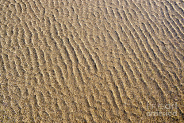 Photograph - Ripples In The Sand by Tim Gainey