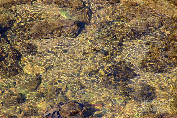 Photograph - Rippling Spring by Karen Adams