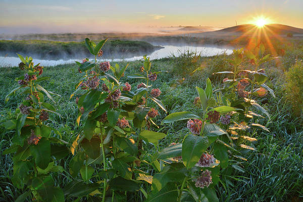Photograph - Rising Sun Backlights Milkweed Along Nippersink Creek In Glacial Park by Ray Mathis