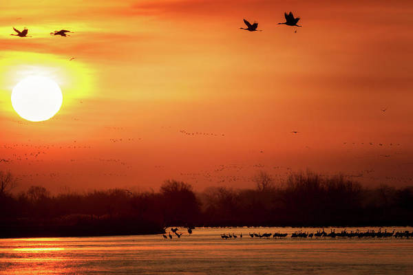 Photograph - Rising Sun by Susan Rissi Tregoning