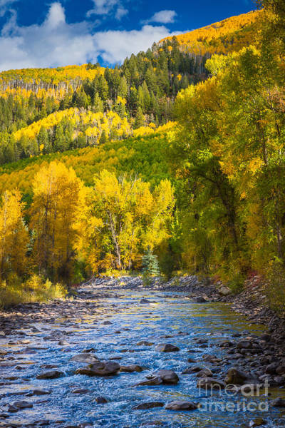 San Juan Mountains Photograph - River And Aspens by Inge Johnsson