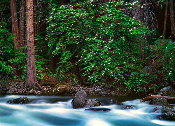 Vallery Photograph - River Bank Blooms by Edward Mendes