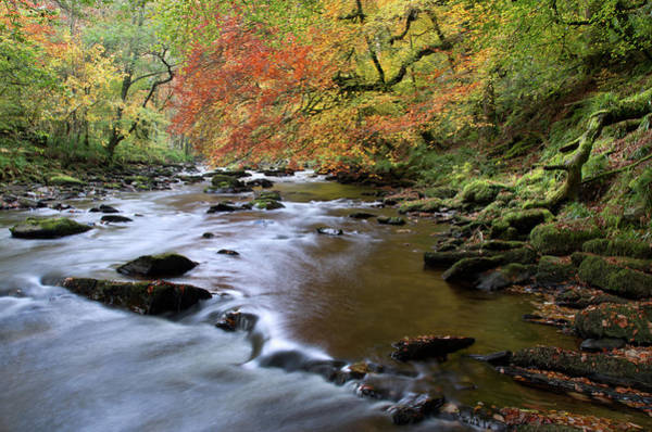 Photograph - River Barle In Somerset by Pete Hemington
