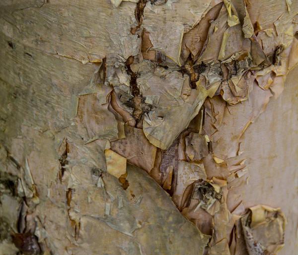 Photograph - River Birch Bark by Allen Nice-Webb