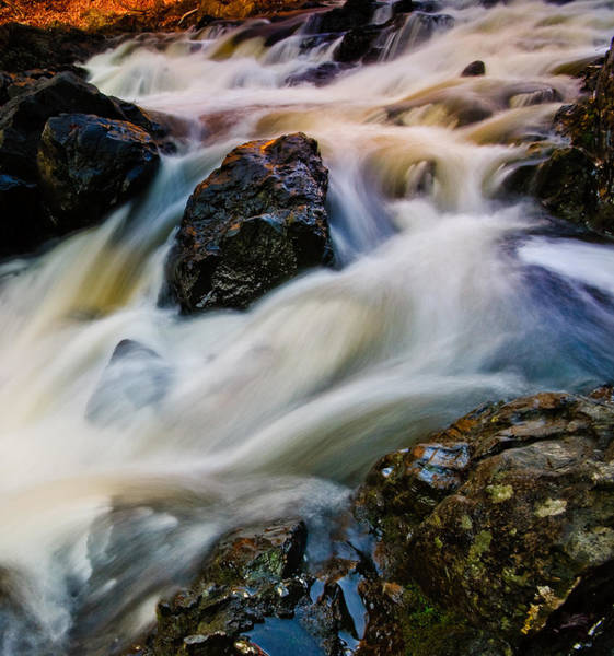 Photograph - River Dance by Neil Shapiro
