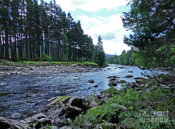 Photograph - River Dee In Summer by Phil Banks