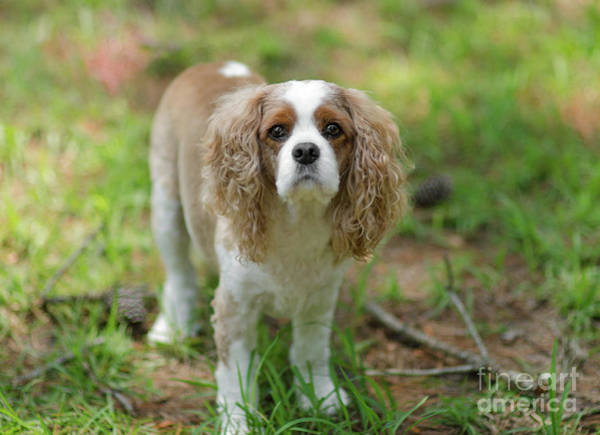 Photograph - River Dog Portrait by Dale Powell