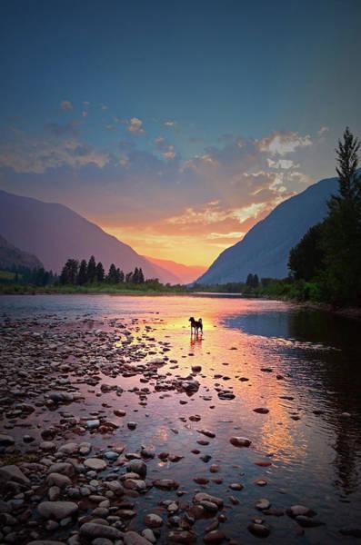 Photograph - River Dog by Tara Turner