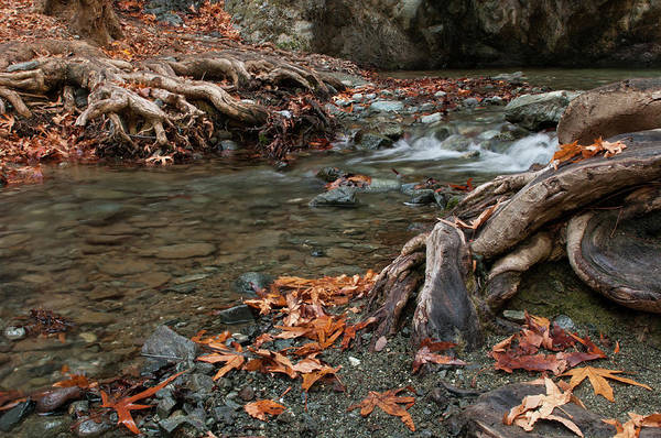 Scenery Wall Art - Photograph - River Flowing  Between Leaves And Trees by Michalakis Ppalis