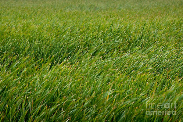 Photograph - River Of Grass by Susan Cole Kelly