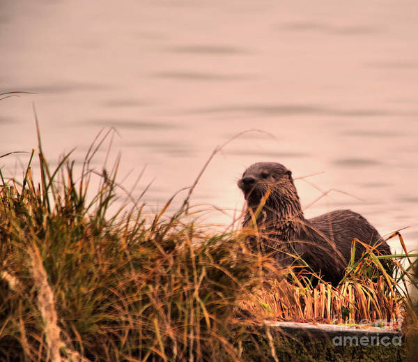 Wall Art - Photograph - River Otter Hanging Out by Jeff Swan