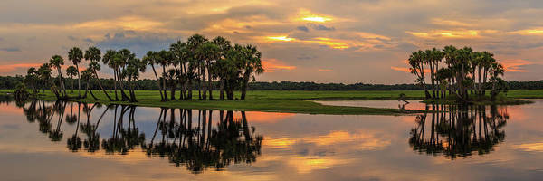 Photograph - River Palm Trees by Stefan Mazzola
