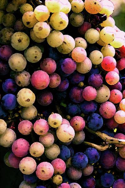 Photograph - River Ridge Winery Confetti Colored Grapes 2762 Dp_2 by Steven Ward