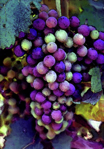 Photograph - River Ridge Winery Grapes Ripening On The Vine 2743 Dp_2 by Steven Ward