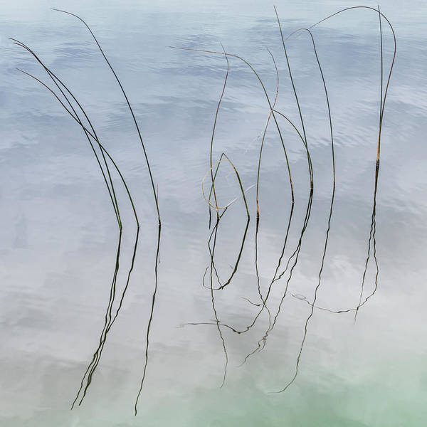 Photograph - River Rushes Abstract #6 by Patti Deters