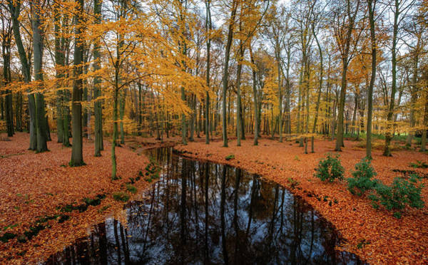 Photograph - River Through Autumn by Mario Visser