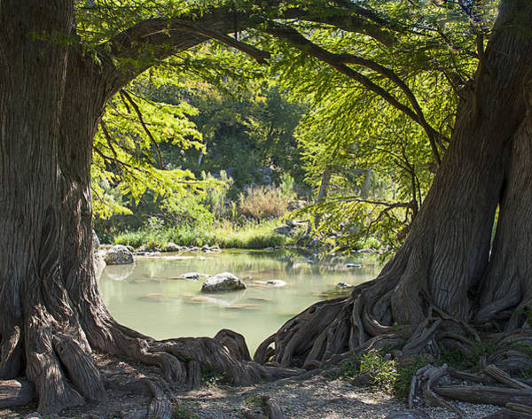 Photograph - River Through Trees by Brian Kinney
