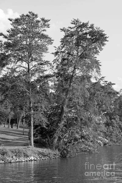 Photograph - Riverbank by Todd Blanchard