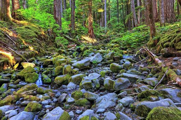 Riverbed Full Of Mossy Stones With Small Cascade Art Print