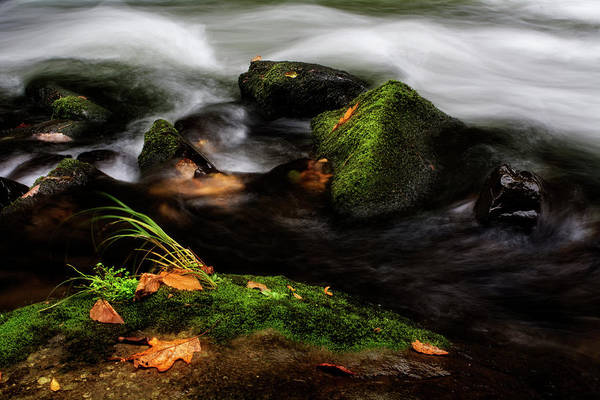 Nantahala Photograph - Rivers Edge by Greg and Chrystal Mimbs