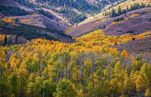 Photograph - Rivers Of Fall Aspen by Lynn Bauer