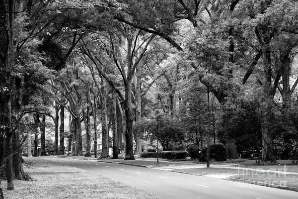 Photograph - Road In Black And White by Jill Lang