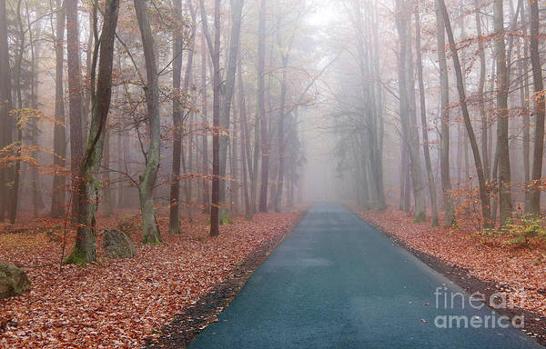 Wall Art - Photograph - Road In The Autumn Beechwood by Michal Boubin