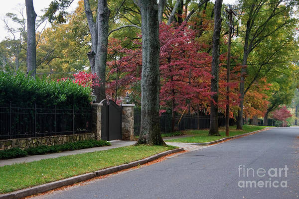 Photograph - Road In The Fall by Jill Lang