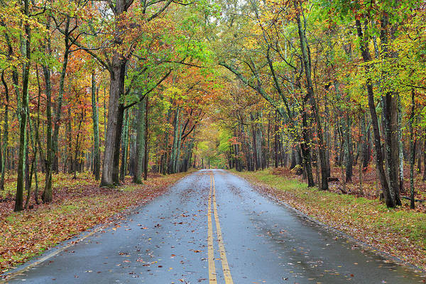 Photograph - Road In The Woods by Jill Lang