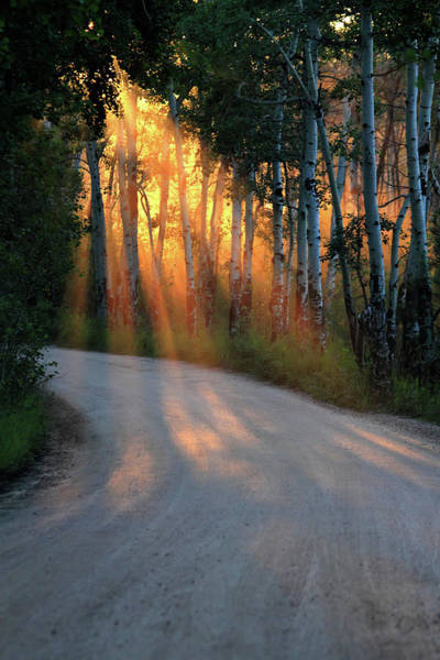 Photograph - Road Rays by Shane Bechler