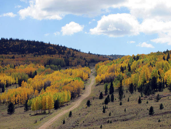 Photograph - Road Through 50 Shades Of Golden Aspens by Julia L Wright
