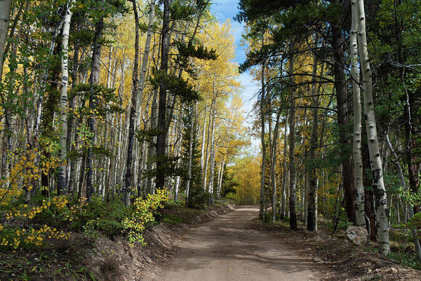 Photograph - Road Through The Autumn Forest by Cascade Colors