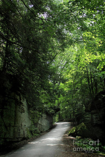 Photograph - Road Through The Forest Gorge by E B Schmidt