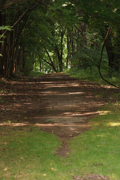 Wall Art - Photograph - Road To Nowhere by Heather Green
