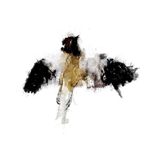 Avian Drawing - Roadkill A Mockingbird by Nicholas Ely