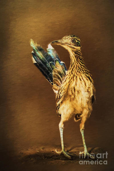 Cuculidae Photograph - Roadrunner At Attention by Priscilla Burgers